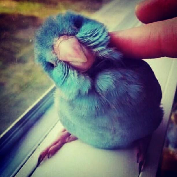 reallifetwitterbird